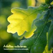 Regalos promocionales ecológicos: arbolitos autóctonos