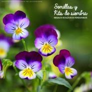 Regalos promocionales ecológicos: semillas y kits de siembra